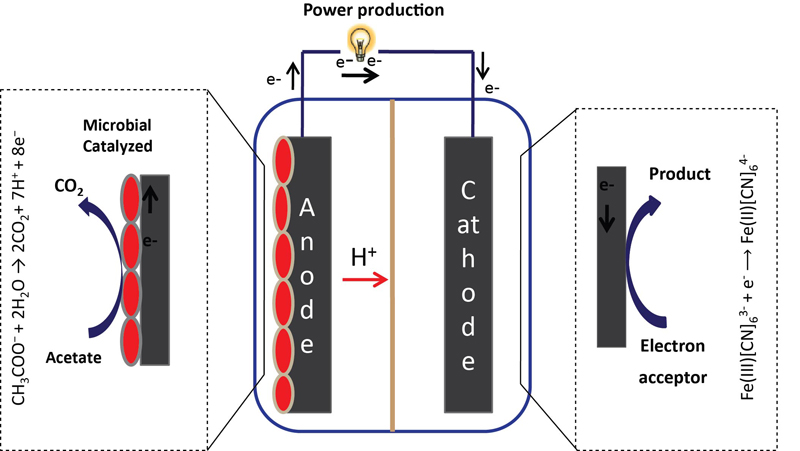 Bioelectricity Generation using Carbon Felt Electrode in Microbial